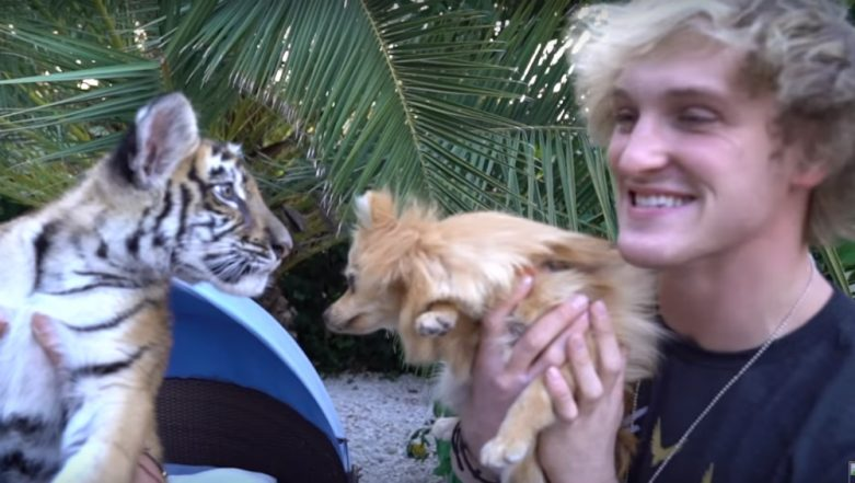 Logan Paul in Controversy Again! YouTube Video 'Kong Meets a Baby Tiger! **Showdown**' Leads to Charges for 'Mistreatment' to a Tiger Cub