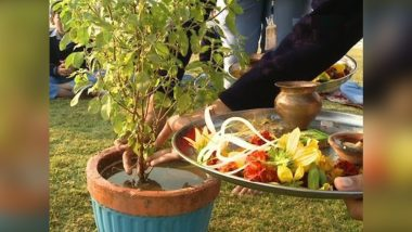 Tulsi Pujan Diwas 2018: Know Health Benefits and Why The Holy Basil is Worshiped on December 25 Every Year