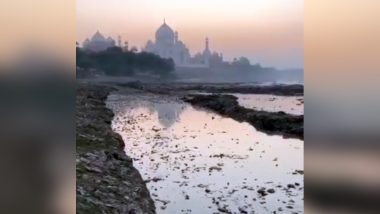 Taj Mahal Stained Due Insect Attack, Green And Black Patches Appear on Marble Walls of Iconic Monument in Agra