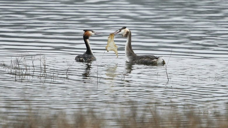 NMCG Resolves to Reduce Plastic Pollution, Help Save Waterbirds
