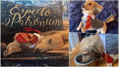 Meet Remus, a Dog Which Responds to Harry Potter Spells! Watch Cute Video