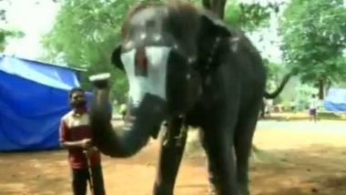 Temple Elephant Plays Mouth Organ at Tamil Nadu Camp (Watch Video)