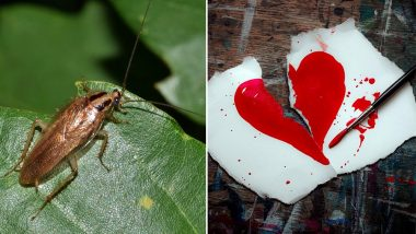 Gift Your Ex A Cockroach After Their Name on Valentine's Day 2019 For Just 1.50 Pound