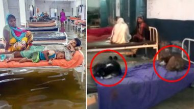 Bihar Shocker: Stray Dogs Occupy Beds at Nawada Govt Hospital, Patients Sleep on Floor
