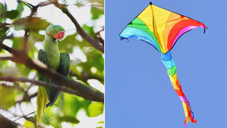 Dead Parrot Photo From Kite Festival During Makar Sankranti 2019 Is Heartbreaking; See Viral Pic
