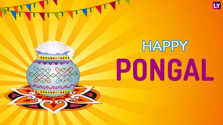 Pongal 2019 Calendar: Here's The Important Dates And Significance of the Tamil Harvest Festival
