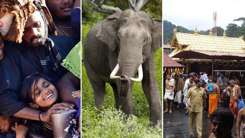 Sabarimala Devotee Crushed to Death by Wild Elephant on Way to Ayyappa Temple