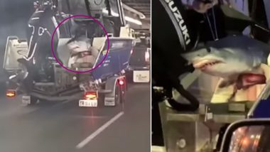Shark Hangs Out of Fishermen's Car on Sydney Highway, Video Goes Viral