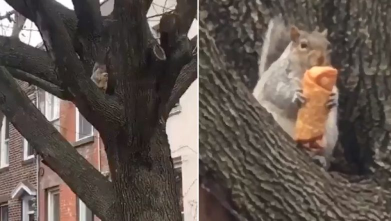 Squirrel Caught Eating an Egg-Roll in New York and The Internet is Feeling Hungry! Watch Funny Video