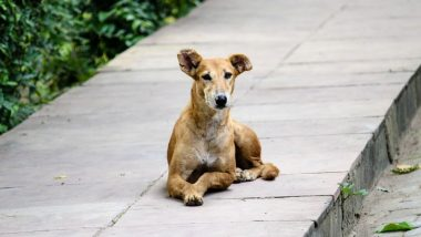 Animal Cruelty in Mumbai: Cases of Dogs Being Poisoned, Beaten to Death on the Rise in the City
