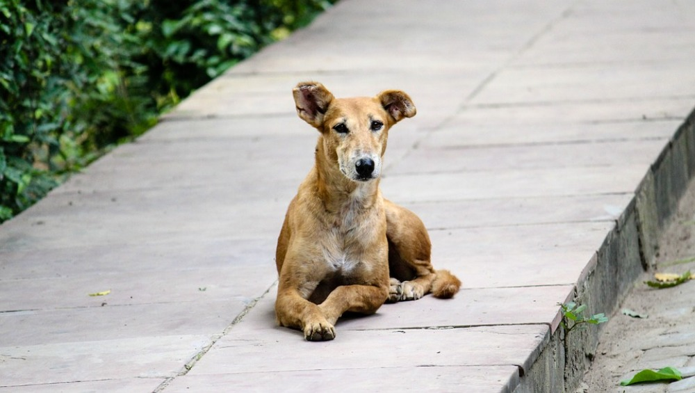 World Rabies Day 2019: What to Do if a Dog Bites You; How to Administer First Aid and Prevent Rabies