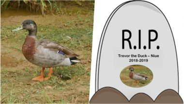 'World's Loneliest Duck' Trevor Dies: See Pics of Niue Island's Only Duck on the Celebrity Bird's Facebook Page
