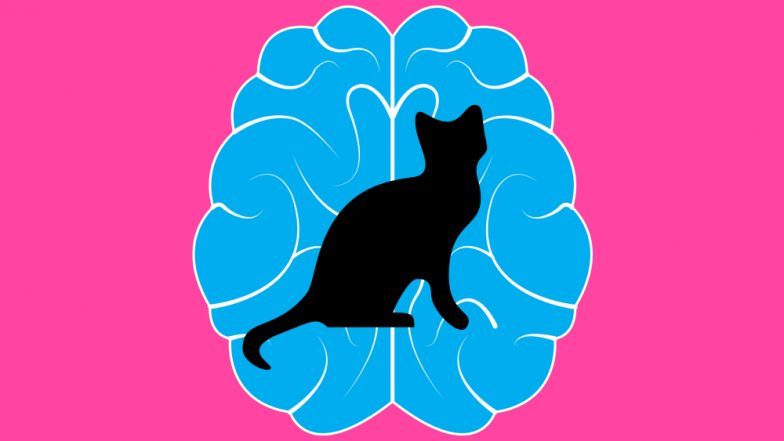 Cat Lovers Beware! Mind-Altering Parasite in Kitties Could Make You Suicidal or Schizophrenic
