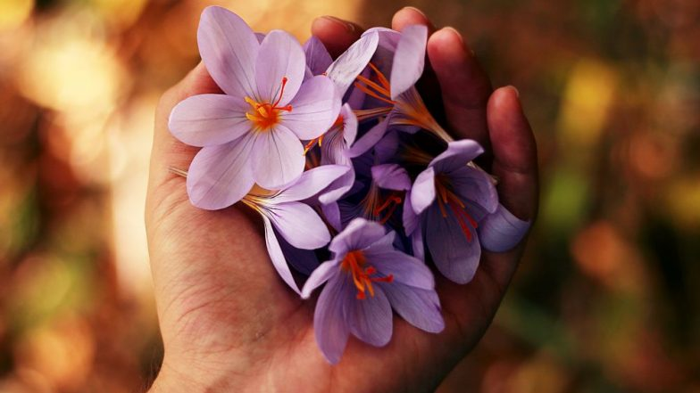 5 Beautiful Flowers That You Can Eat for Numerous Health Benefits