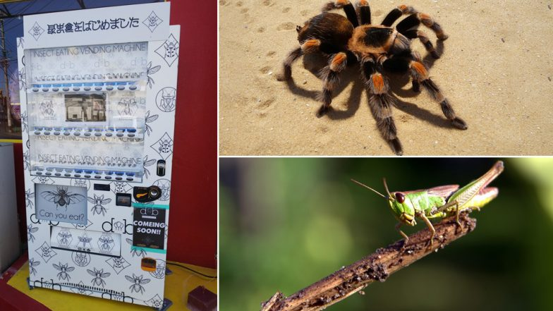Insect Vending Machine in Japan! Salted Crickets, Crunchy Beetles and Canned Tarantulas are a Big Hit as Snacks Here