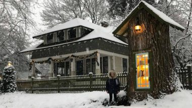 Library Under the Tree! Idaho Woman Turns 110-Year-Old Tree Stump Into a Cool Little Library & Book Lovers Are in Love With It (View Pictures)
