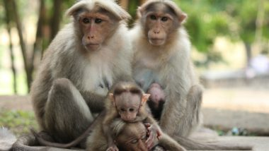 Monkey Census in Delhi For First Time To Gauge Trouble Created by The Animal