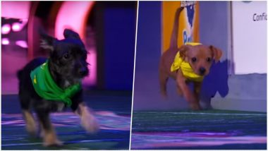 Puppy Bowl 2019 Ahead of Super Bowl LIII: Adorable Rescue Pups Are Ready to Steal Sunday's Show (Watch Video)