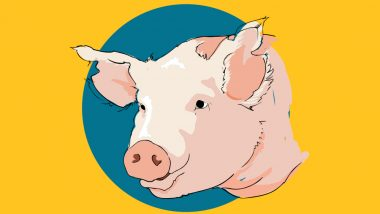 Swine Flu Prevention: Important Tips to Stay Protected From H1N1 Infection