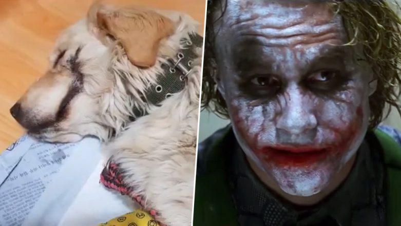 Pranksters Slice Golden Retriever Puppy's Mouth Open Like 'Batman Villain the Joker,' Burn and Break Its Leg in South Korea