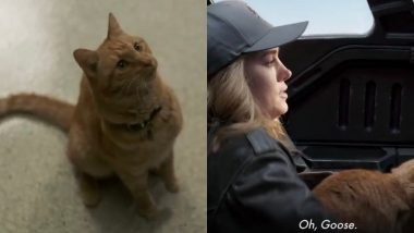 Captain Marvel New Promo: This New Clip Of Goose The Cat Doing Basic Things Is Practically Purrfect! Watch Video