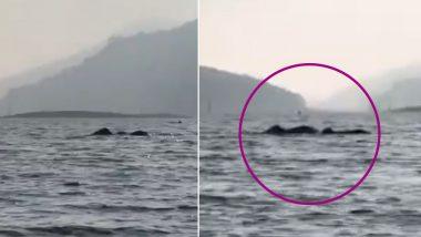 Elephants Swimming Across Kerala's Periyar River Amaze Netizens, Video Goes Viral