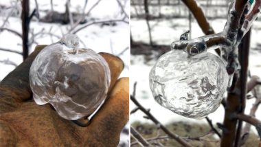 Rare 'Ghost Apples' Appear on Trees in Michigan As Freezing Temperatures Continue (See Pictures)