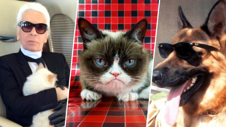 Surprised by the Money Karl Lagerfeld's Pet Cat Choupette Inherits? Meet 5 Pet Animals Who Own a Fortune!
