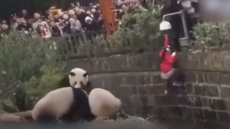 Watch Video: Dramatic Rescue of 8-Year-Old Girl Who fell Into Giant Panda Enclosure In China's Chengdu City