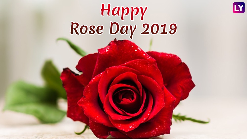 Rose Day 2019 Images & HD Wallpapers for Free Download ...