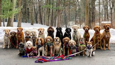 Pictures of Pack Walking Dogs by Saratoga Dog Walkers in New York Are Full of Squad Goals! View Pics