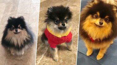 BTS Member V's Adorable Dog Video Has Left All Fans Going Awww... Watch Cute Video of Tannie
