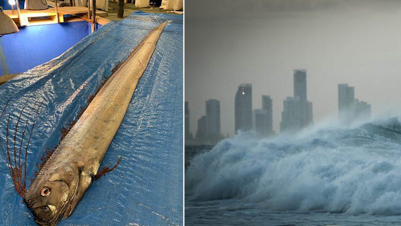 Earthquake and Tsunami Warning in Japan? Deep-Sea 'Oarfish' Associated With Bad Omen Sparks Fear