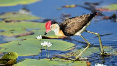 World Wetlands Day 2019: Importance and Theme of the Day For Nature Conservation and Solution For Climate Change