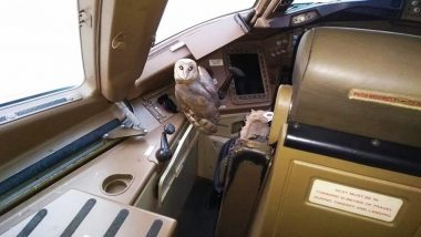 Mumbai Airport: Owl Found in Cockpit of Jet Airways Boeing 777 Plane Parked at Chhatrapati Shivaji Maharaj International Airport