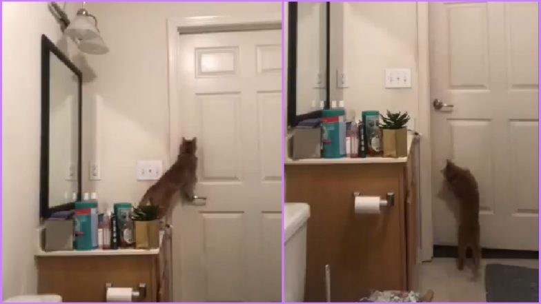 Video of Cat Opening Bathroom Door Goes Viral, Cat Owners on Twitter Share Their Own Hilarious Experiences