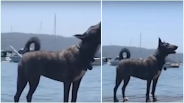 Dog Barks & Shoots Butt Water After Too Much of Sea Water Intake While Swimming; Watch Viral Video