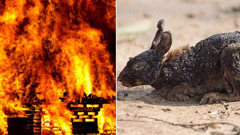 Bandipur Forest Fire: FAKE Photos of Dead Animals from Karnataka Tiger Reserve Circulate on Social Media! Here's the Truth