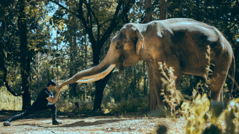 Junglee Box Office Collection Day 3: Vidyut Jammwal's Jungle Drama Collects a Decent Sum of Rs 13.85 Crore in its Opening Weekend