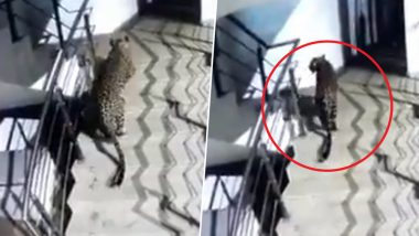 Leopard Spotted Walking in Thane's Korum Mall, Search Operation Underway; Watch Video