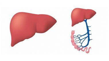 Lift Weights for Healthy Liver! Strength Training May Help Reduce Fatty Liver Disease