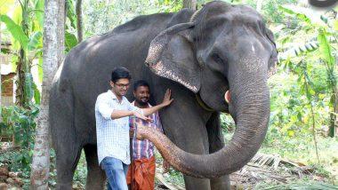 Granny Dakshayani, India's Oldest Elephant in Captivity Passes Away in Kerala at 88
