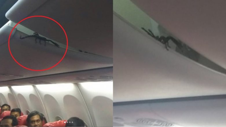 Lion Air Passenger Shares Video of Scorpion Crawling Out of Overhead Luggage; Video Goes Viral