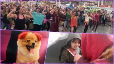 Viral Videos of the Week: From California Flash Mob to Man Throwing iPhone Into Bear Enclosure; Internet Is in Love With These Top 7 Hilarious Clips