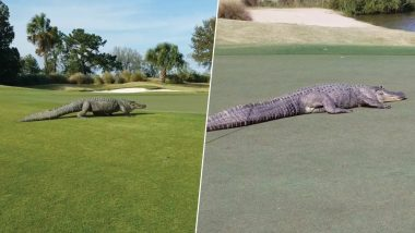 Giant Alligator Crawls Across Georgia's Savannah Golf Course Shocking People (Watch Video)