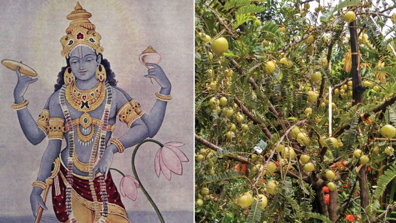 Amalaki Ekadashi 2019 Date and Time: Know Tithi, History and Vrat Significance of This Auspicious Day Worshipping Lord Vishnu