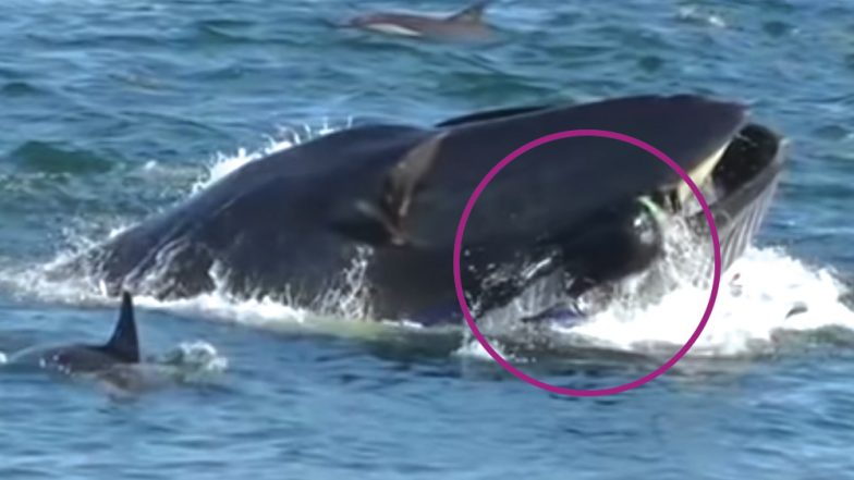 South African Diver Was Swallowed Alive By Whale But Miraculously Escaped (Watch Video)