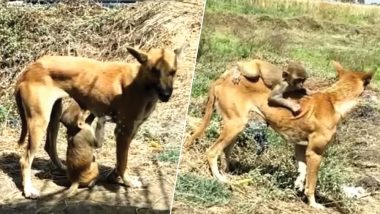 Dog Adopts Abandoned Baby Monkey in Madhya Pradesh Village, Cute Video Goes Viral