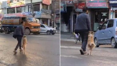 Dog Holds His Owner's Hand While Crossing The Street in Nepal, Watch Cute Video Going Viral
