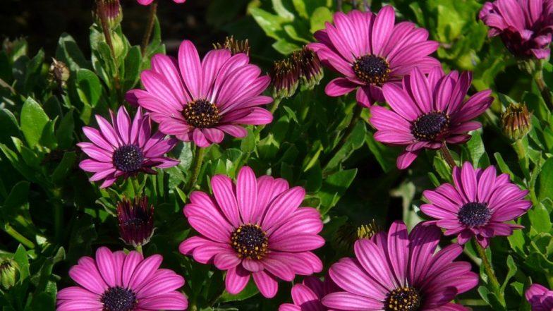 Vasantotsav 2019: Uttarakhand's Annual Spring Flower Festival Kickstarts, Know All About the Event